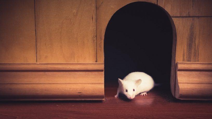 se débarrasser des souris et des rats