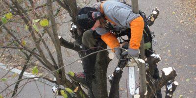 élagage des arbres