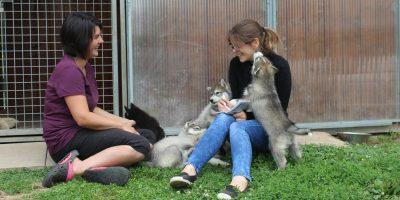élevage canin